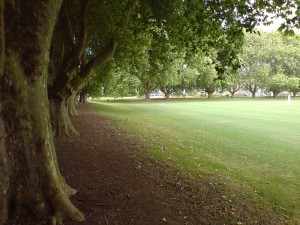 Victoria_Park_Auckland_Eastern_End_Trees-300x225