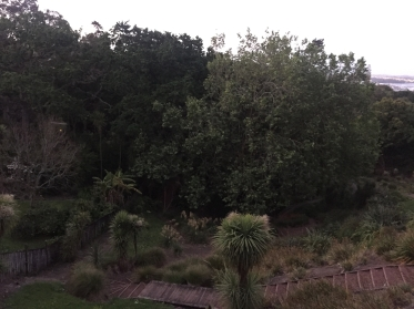 From the lookout at Hopetoun Street. Even from  this commanding position, visibility into the park is very poor due to dense planting. Lighting will not fix this.